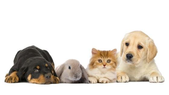 PERDITA O FERIMENTO DEL NOSTRO ANIMALE DA COMPAGNIA RISARCIMENTO DEL DANNO MORALE